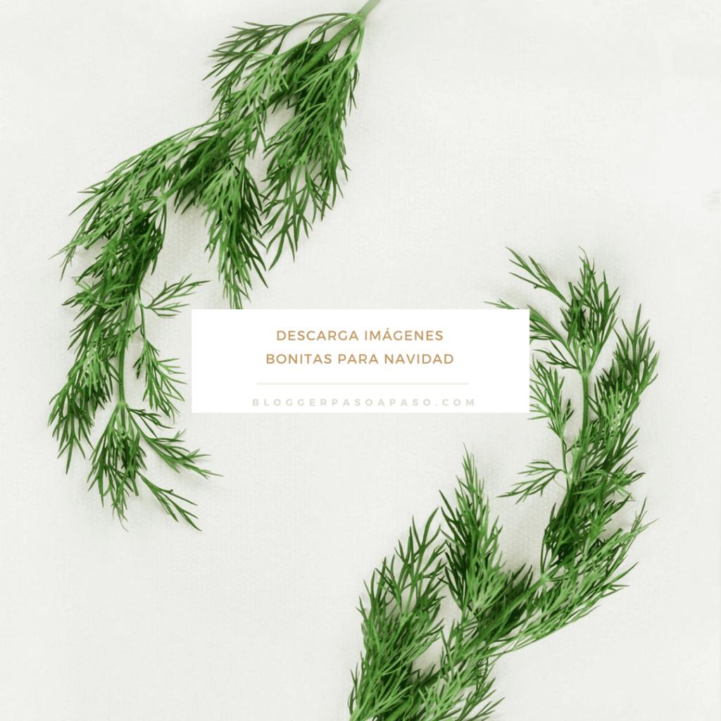 Descarga imágenes gratis IMAGENES de Navidad bonitas para poner bonito tu blog